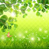 Green Grass Tree Branch Butterfly Background Royalty Free Stock Photo