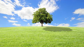 Green grass and tree, clouds background.