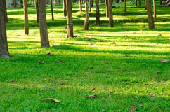 Green grass and tree in garden park,Lampang Thailand Stock Images