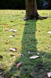 Green grass and tree. Green grass and tree on the ground and roots Stock Photo