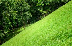 Green grass and tree. In the morning Stock Photography
