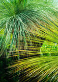 Green Grass Tree Plant Royalty Free Stock Photography