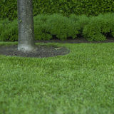 Green grass and tree trunk Stock Image