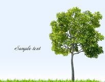 Green grass and tree. Vector Royalty Free Stock Images