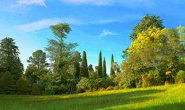 Green grass and trees on a field Stock Photos