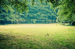 Green grass and trees. A glade in an urban park royalty free stock photo