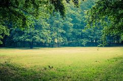 Green grass and trees. A glade in an urban park stock photos