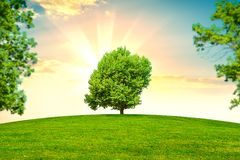 Green grass and trees. On background beautiful sunset orv sunrise Royalty Free Stock Photo