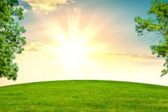Green grass and trees. On background beautiful sunset orv sunrise Stock Photos