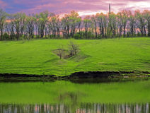 Green grass with trees by the lake Royalty Free Stock Photography