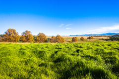 Green Grass Trees Landscape Colors Stock Images