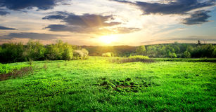Green grass and trees stock photography