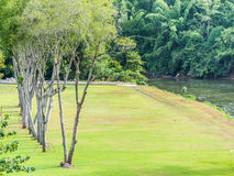 Green grass, trees, river and forest landscape Stock Photo