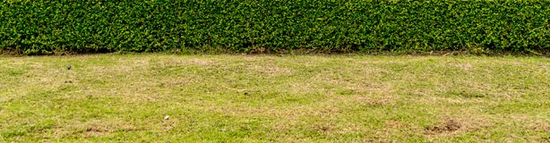 Green trimmed plants. Green grass with trimmed green plants hedge in the park Royalty Free Stock Photography