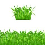 Green grass tuft and border on white background. Nature design elements. Vector illustration Stock Images