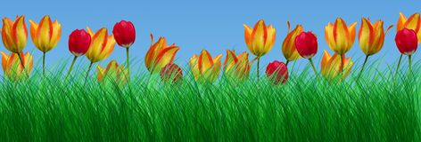 Green grass and tulips Stock Photos