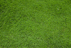 Green grass turf floor texture Stock Image