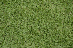 Green grass turf floor texture Royalty Free Stock Photo