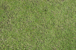 Green grass turf floor texture Royalty Free Stock Photography