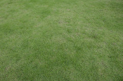 Green grass turf floor texture Stock Photo