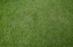 Green grass turf floor Royalty Free Stock Images
