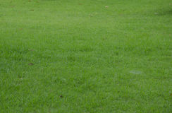 Green grass turf floor Stock Image