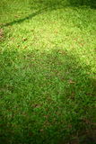 Green grass turf Royalty Free Stock Photography
