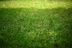 Green grass turf Stock Image