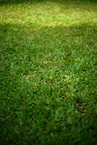 Green grass turf Royalty Free Stock Photos
