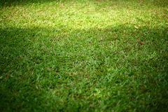 Green grass turf Stock Photography