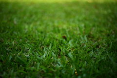 Green grass turf Stock Images