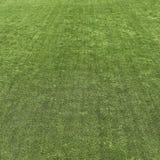 Green grass turf texture Stock Image