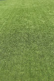 Green grass turf texture Stock Photography