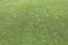 Green grass turf texture background Stock Photos