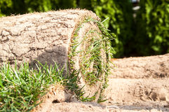 Green grass twisted into a roll Royalty Free Stock Photo