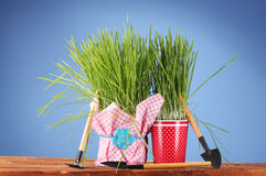 Green grass in two flowerpot Royalty Free Stock Photography