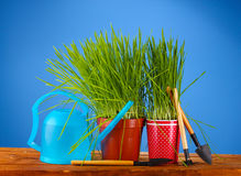 Green grass in two flowerpot Royalty Free Stock Photos
