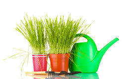 Green grass in two flowerpot Stock Image