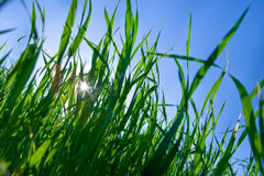 Green grass under blue bright sky Royalty Free Stock Images