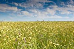 Green grass under blue bright sky Stock Photos