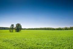 Green grass under blue bright sky Stock Image
