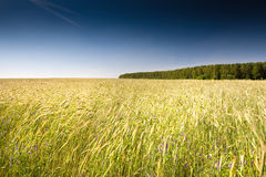 Green grass under blue bright sky Royalty Free Stock Photography