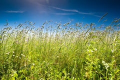 Green grass under blue bright sky Royalty Free Stock Image