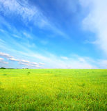 Green grass under blue sky Royalty Free Stock Photo