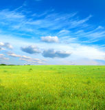 Green grass under blue sky. Landscape with green grass under blue sky Royalty Free Stock Photo