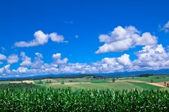 Green grass  under blue sky Stock Photos