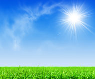 Green grass under blue sky Stock Images