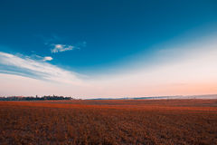 Green grass. Under blue sky Stock Photos