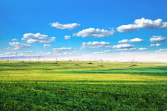 Green grass. Under blue sky Royalty Free Stock Image