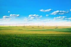 Green grass. Under blue sky Stock Photography